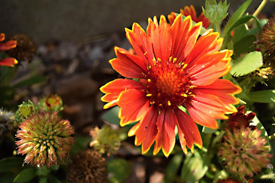 Garden flower perennial free photo on pixabay garden flower perennial garden flower nature mightylinksfo