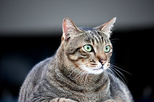 Najlepšie zadarmo mačička videá