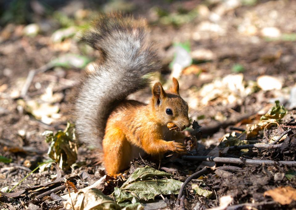 Top Eekhoorn Dieren Herfst · Gratis foto op Pixabay &QB73