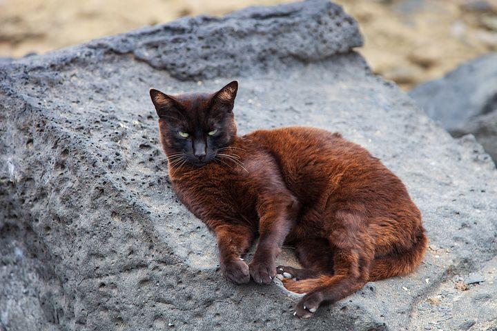 cat-3559580__480.jpg