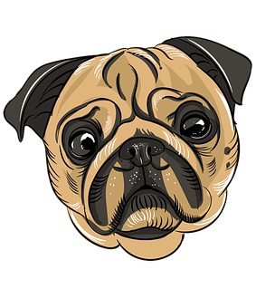 Pugs, Pug, Dog, Pet, Cute, Puppy, Canine