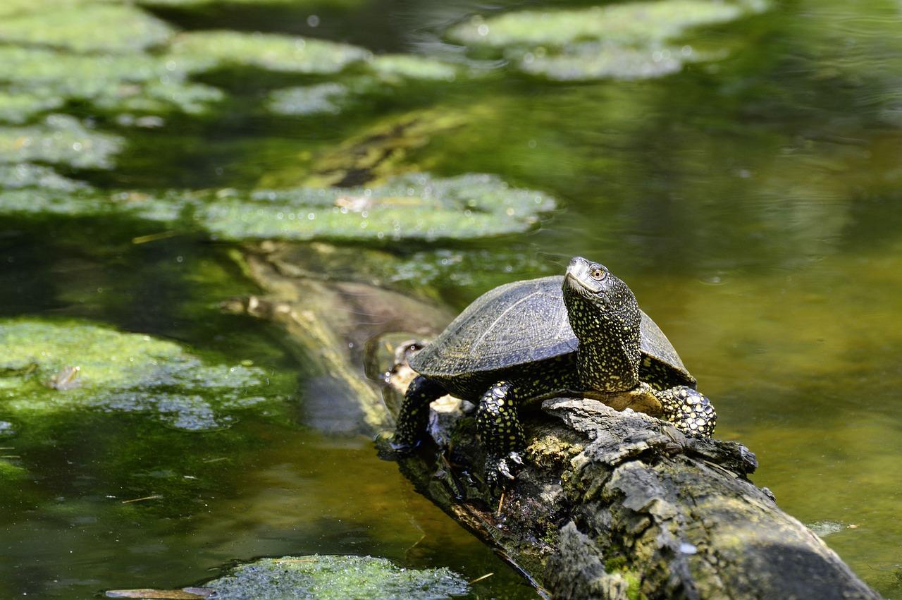 Картинки черепах беларуси