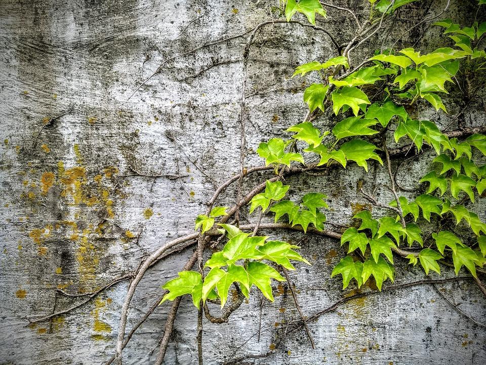 Бетон лоза бетонные смеси бст технические характеристики