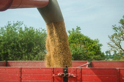 Россия экспортировала 4,5 млн тонн зерна в сентябре; запасы пшеницы на юге — на пятилетнем минимуме