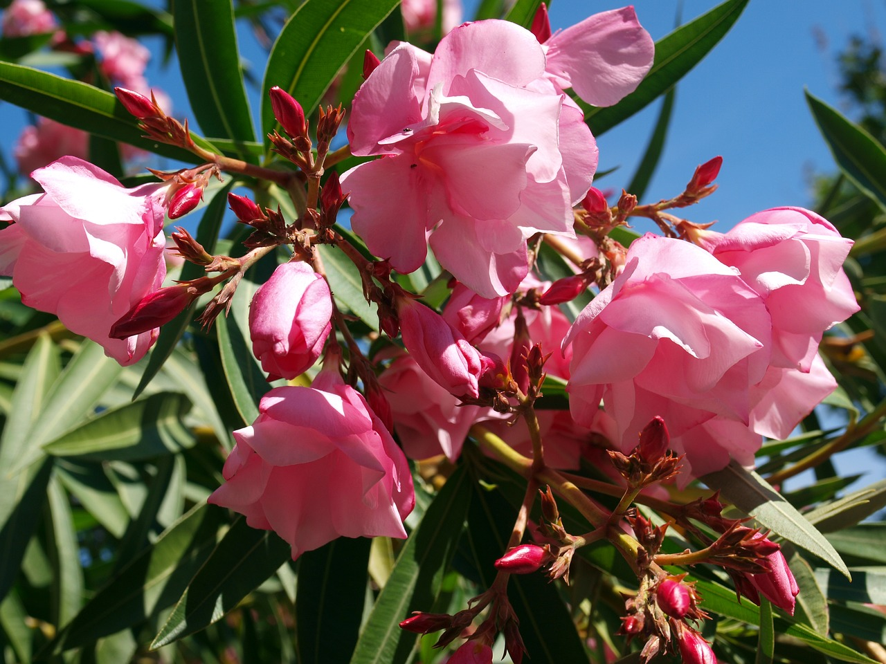 цветущие южные растения фото с названиями