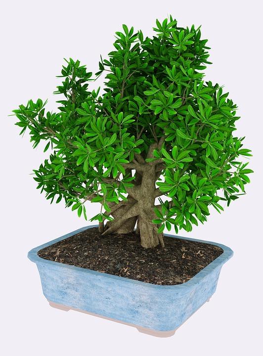 Tree 3D Render - Free image on Pixabay