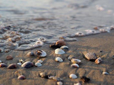 Sea, Water, Beach, Salt Water