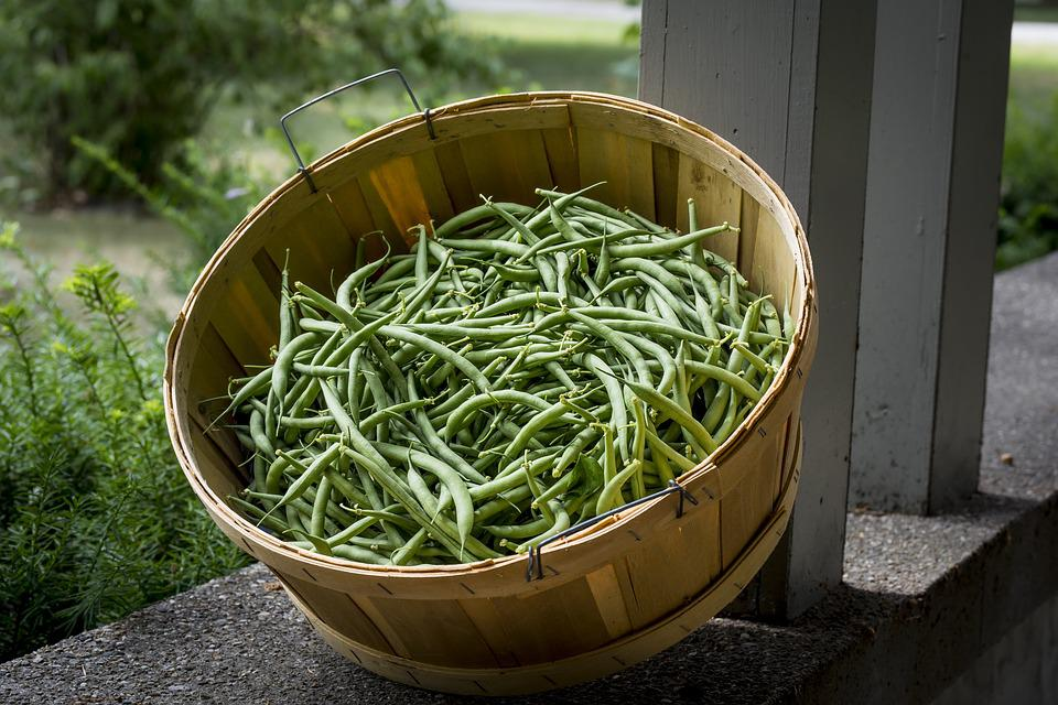 Green Beans, Produce, Food, Fresh, Nutrition, Green