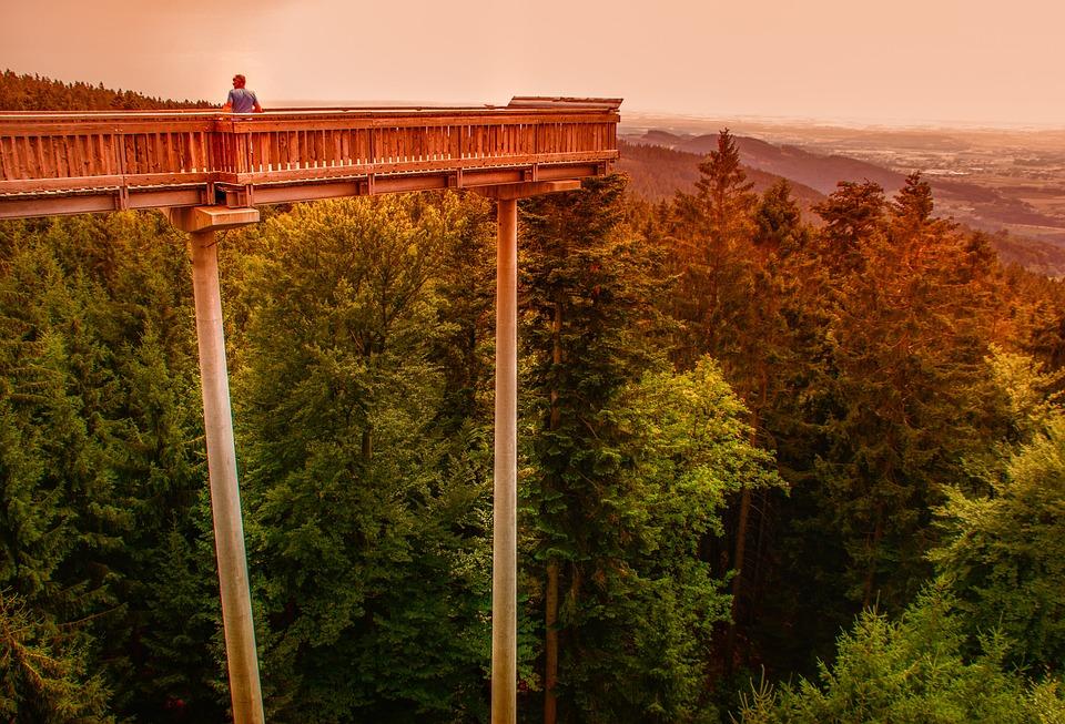 Natur, Laufsteg, Beobachten, Steg, Architektur, Brücke