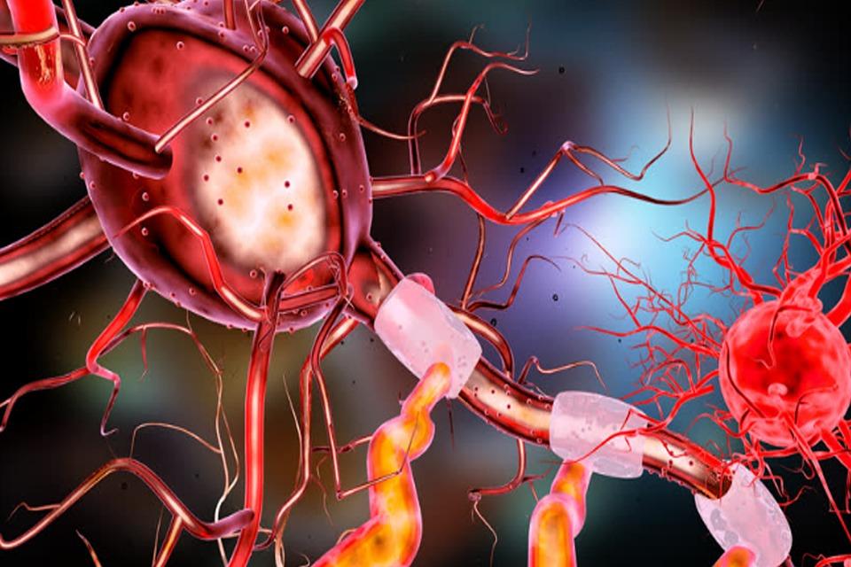 Neuron, Brain, Human, Nerve, Science, System, Medical