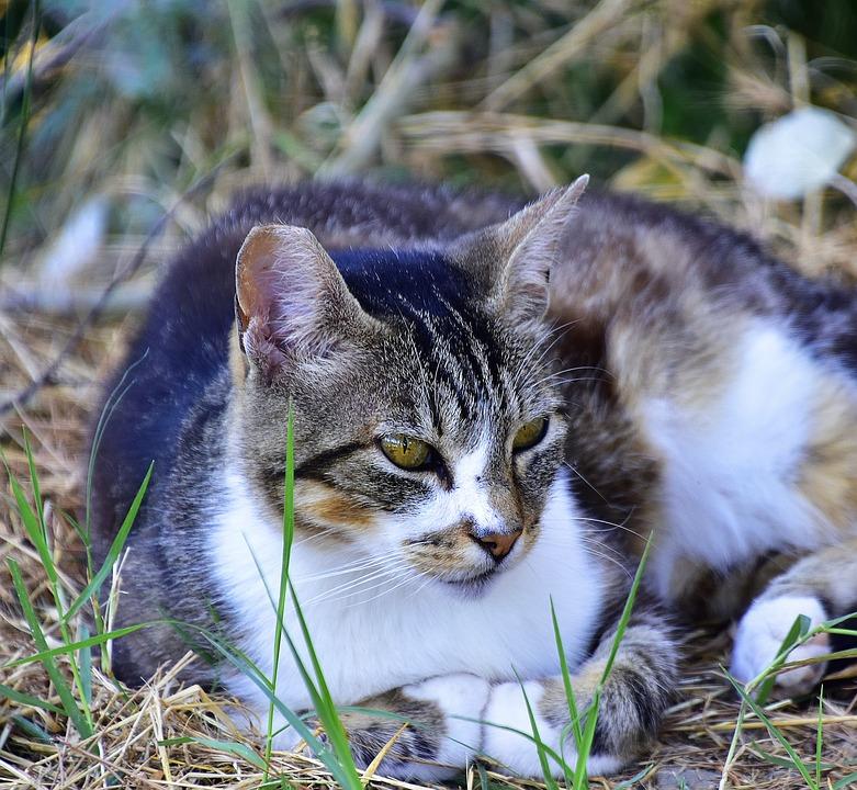 6dedf2007c7b Γάτα Γάτες Κατοικίδιο Ζώο - Δωρεάν φωτογραφία στο Pixabay