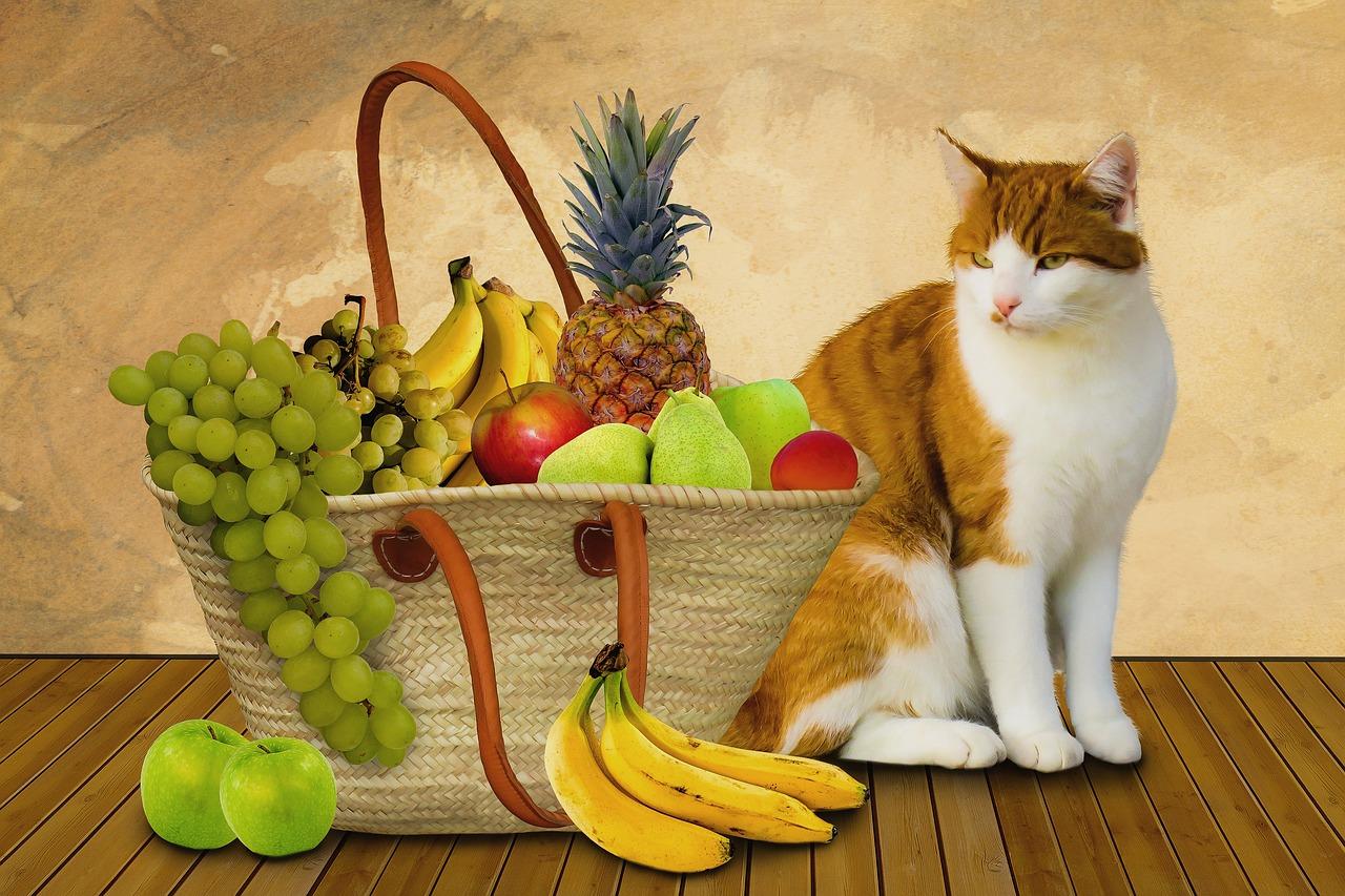 Картинки котики с фруктами увольнения имейте