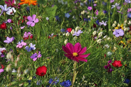 Wildflowers, Meadow, Grass, Plants