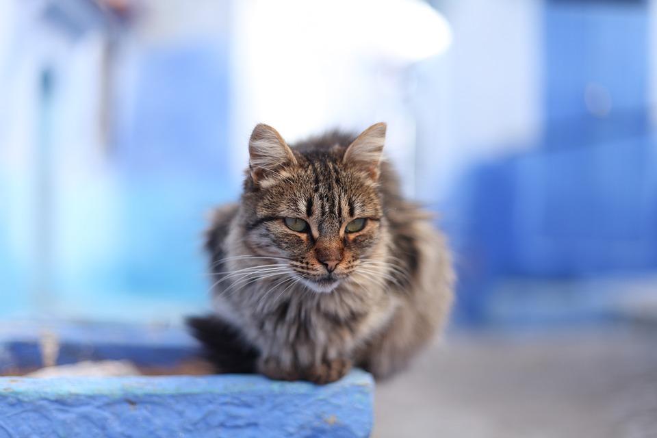 veľké vlasy mačička com