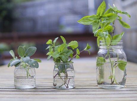 Fresh, Herbs, Food, Cooking, Organic
