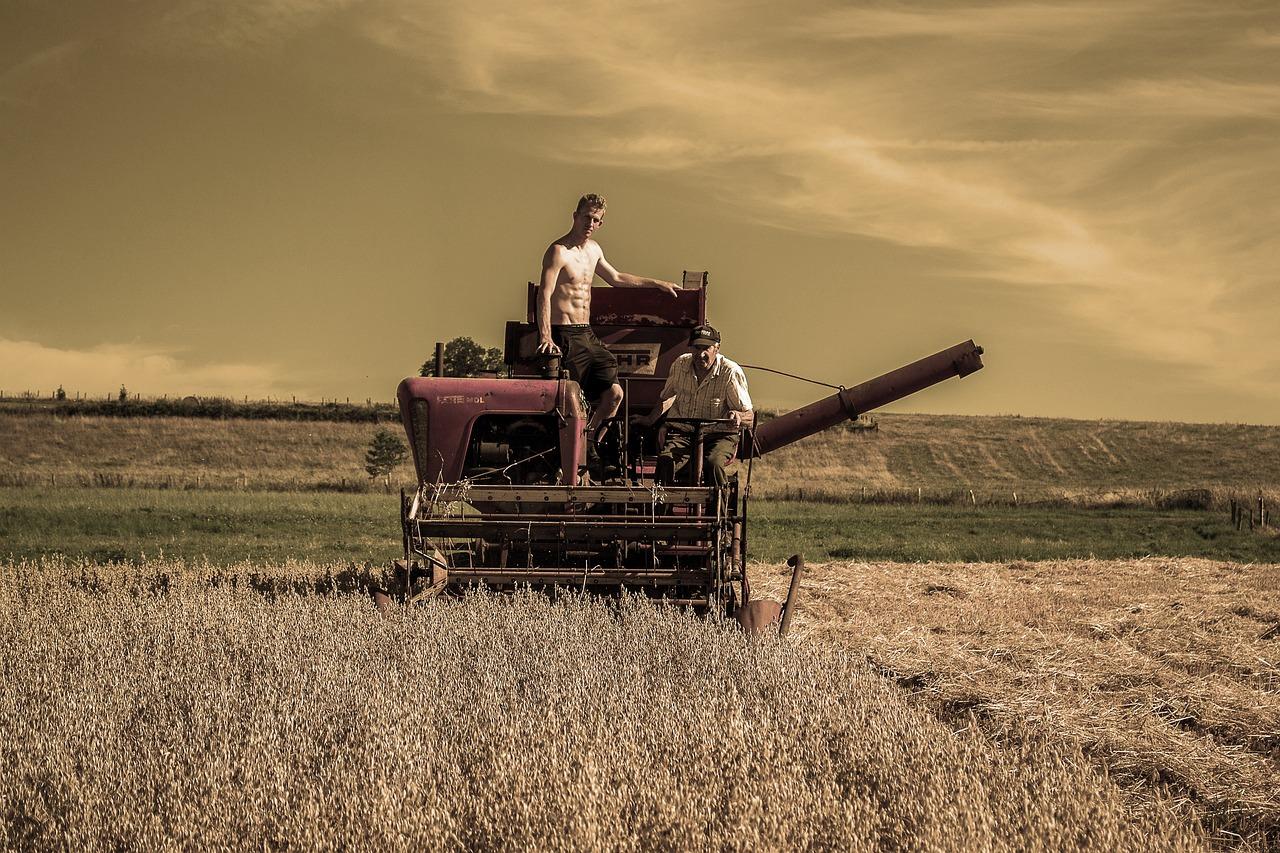 картинки поле комбайн урожай школьникам могут
