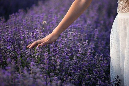 Lavender, Nature, Flowers, Plants