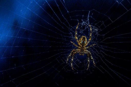 Spider, Web, Hairy, Repairing Web
