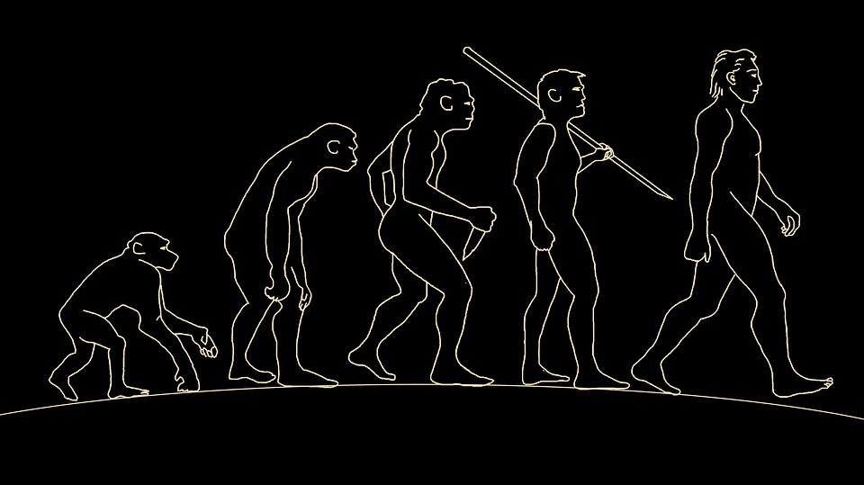 Man Human Evolution Free Image On Pixabay