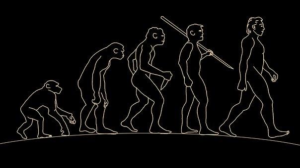 Man, Human, Evolution, Body, Prehistory