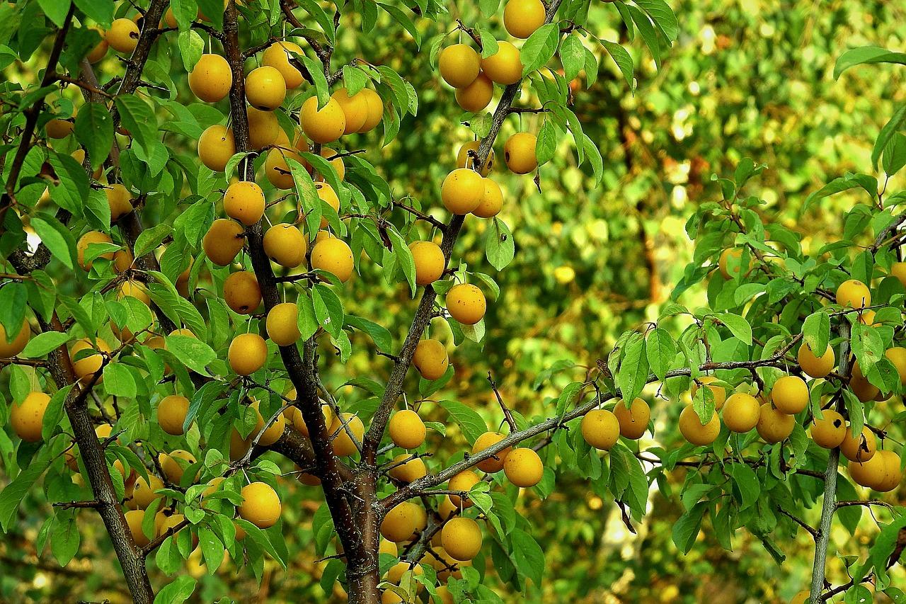 Плодовые деревья и кустарники в картинках
