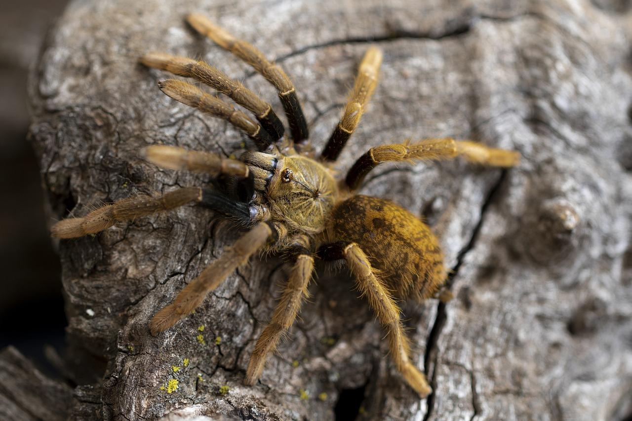картинки про тарантула