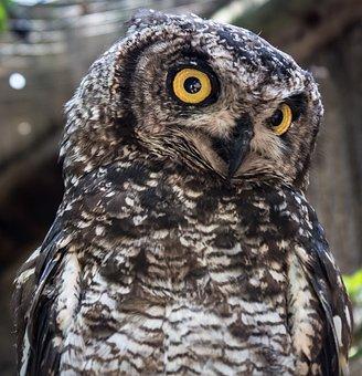 Eule, Weisheit, Natur, Vogel, Tier, Süß