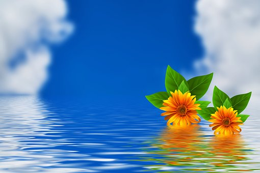 Flowers, Sky, Water