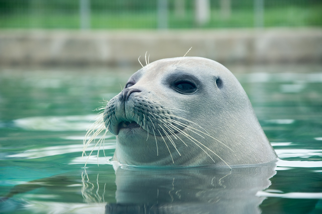 Pinniped v0.9.0: Bring Your LDAP Identities to Your Kubernetes Clusters