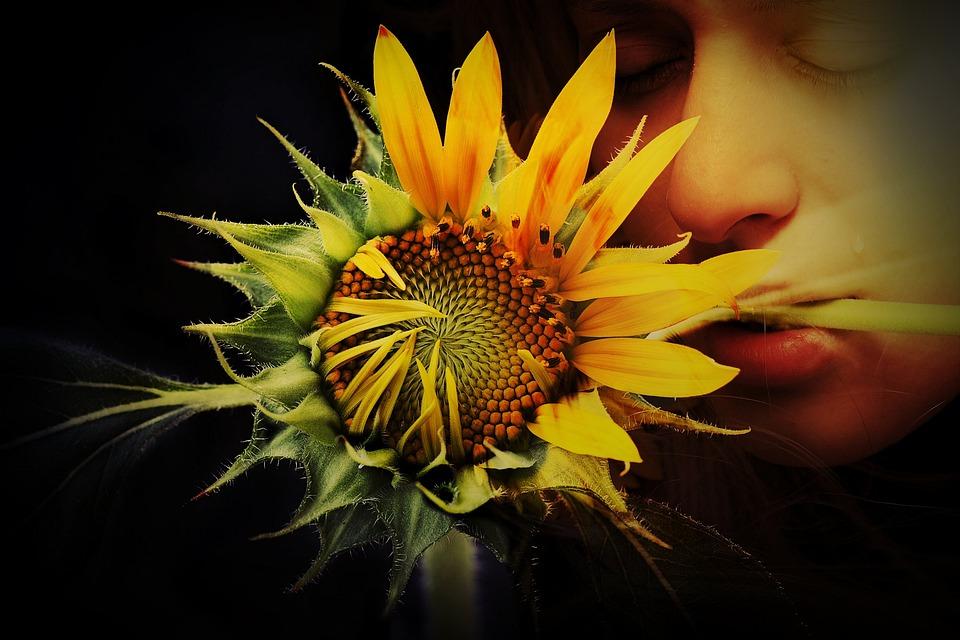 Flower, Tear, Sun, Sunflower, Yellow, Green, Emotion