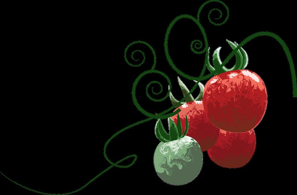 Tomato Fruit Food - Free vector graphic on Pixabay