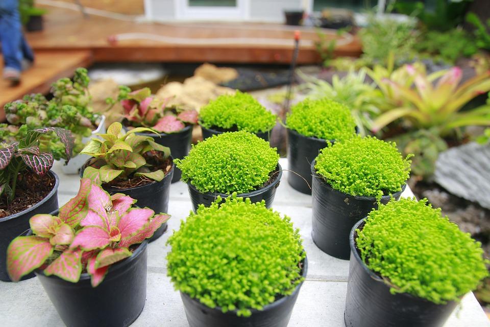 Ogrod Kwiaty Rosliny Ogrodowe Darmowe Zdjecie Na Pixabay