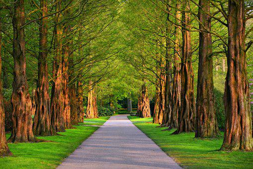Lane, Tree, Tree Lined Lane, Park, Path