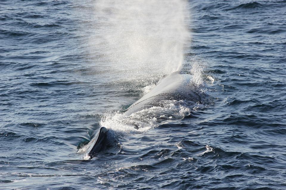 Ilustrasi paus sperma di laut lepas