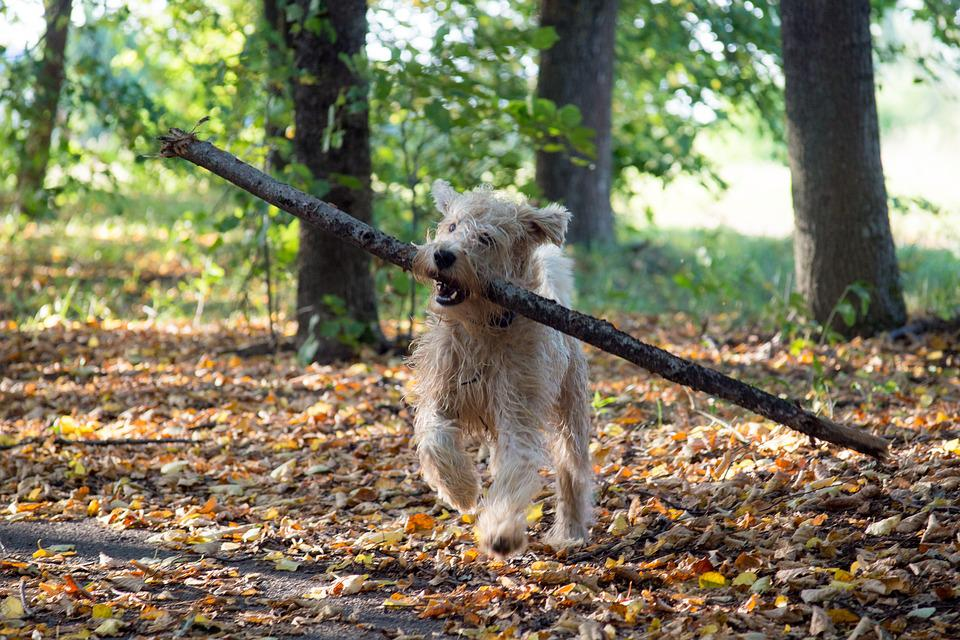 Dog, Animal, Pet, Stick, Cute, Funny, Portrait, Canine