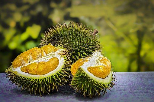 Durian, Frutas, Tropical, Malásia