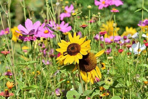 Bunga Matahari Liar Fotos Unduh Gambar Gratis Pixabay