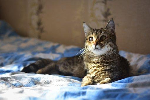 Malé tmavé mačička pics