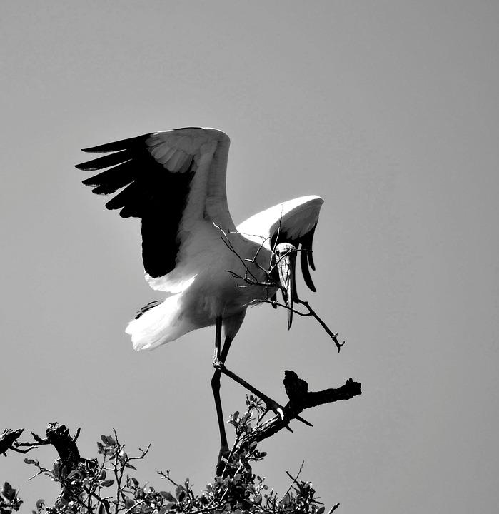 σκληρό μαύρο πουλί pic