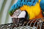 ara, parrot, yellow macaw