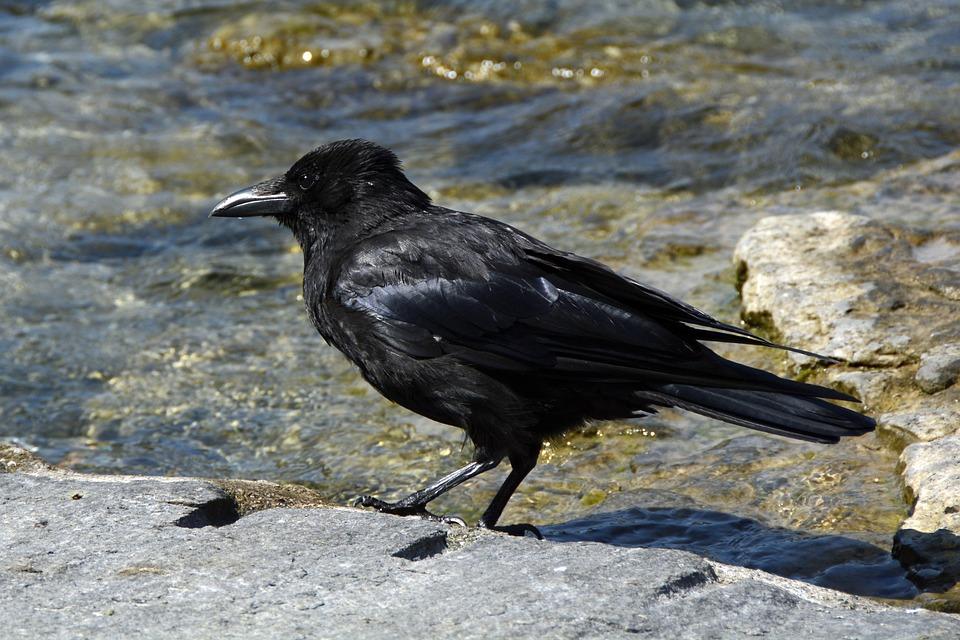 veľké čierne vtáky Telugu Gay sex chat