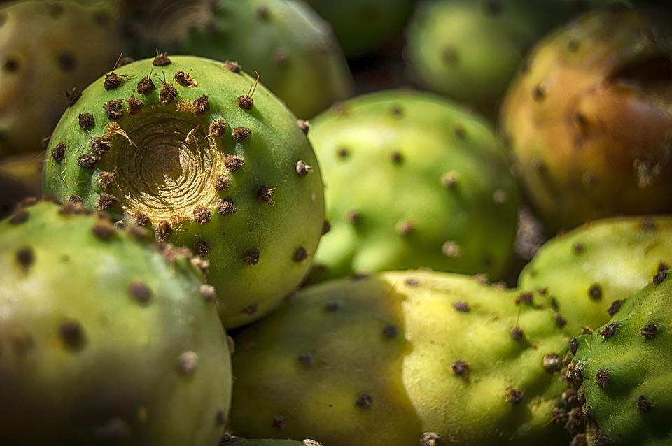 Prickly梨, ウチワサボテン, フルーツ, 串, スペイン, 食品