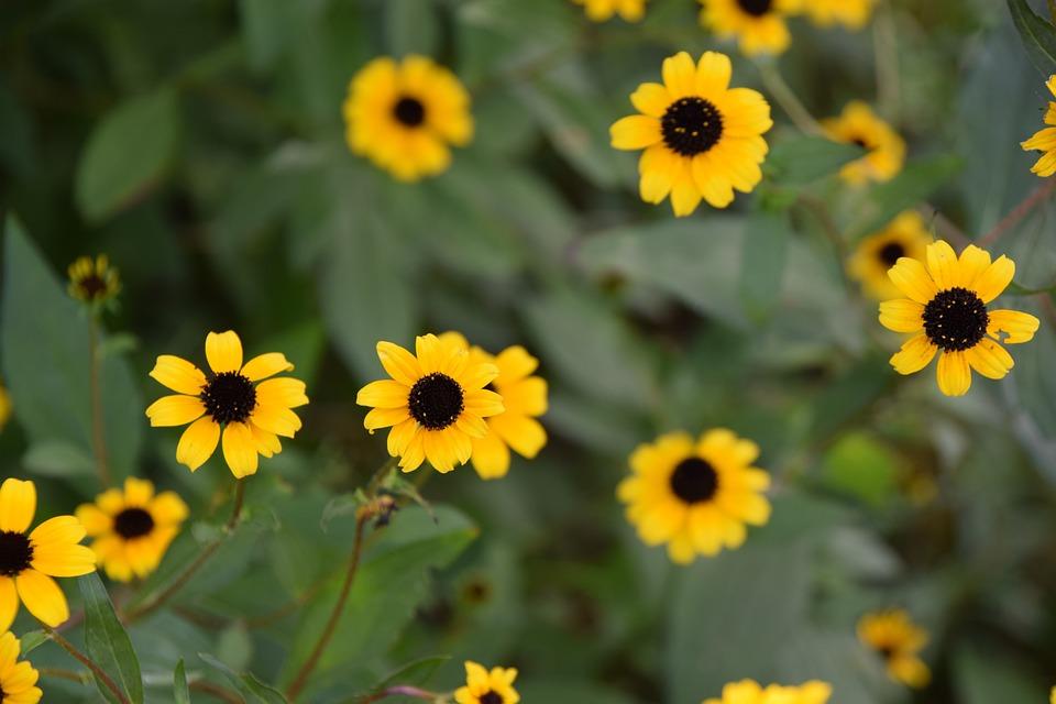 Yellow flower brown center free photo on pixabay yellow flower brown center spring gardening bloom mightylinksfo