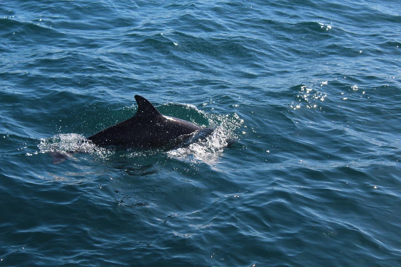 что это киты австралии фото заметил его рядом