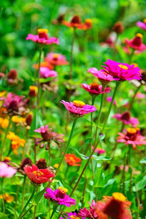 59f5337623ed Color Leto Kvety - Fotografia zdarma na Pixabay