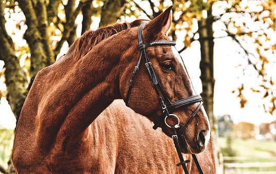 Pferd, Braun, Tier, Tierwelt