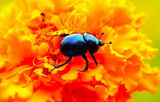La Forêt Scarabée, Insecte, Fleur, Turc