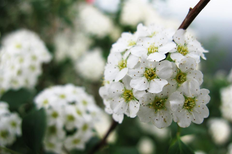 Flowers white summer free photo on pixabay flowers white summer beautiful love garden bloom mightylinksfo