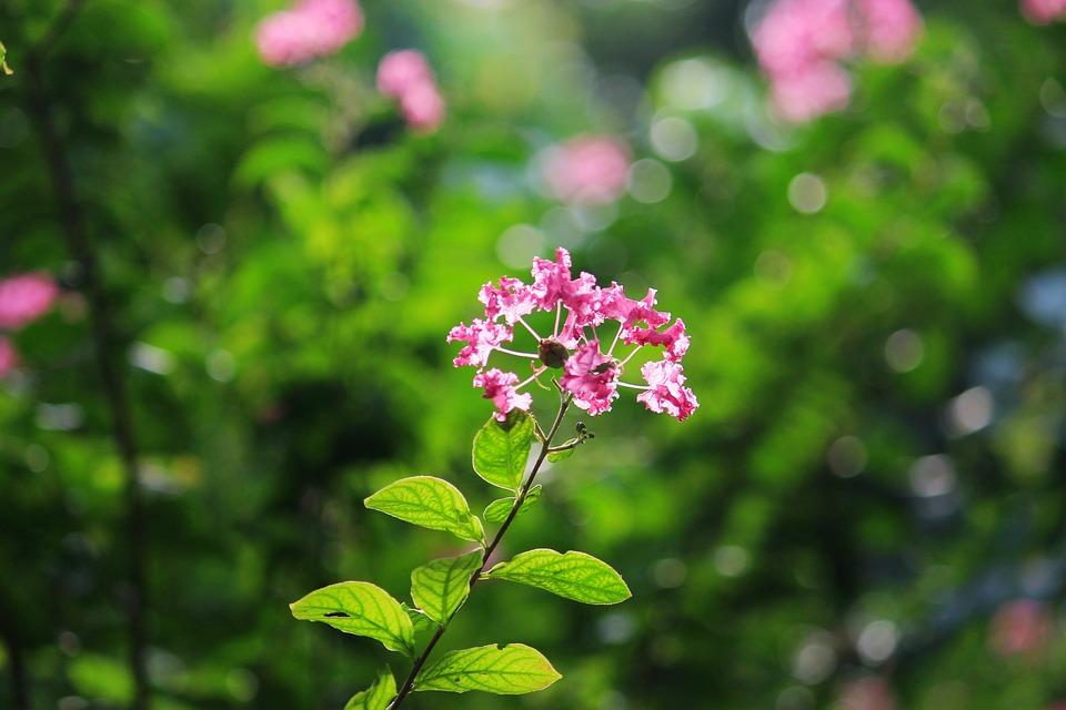 Flower Beauty Nature Free Photo On Pixabay