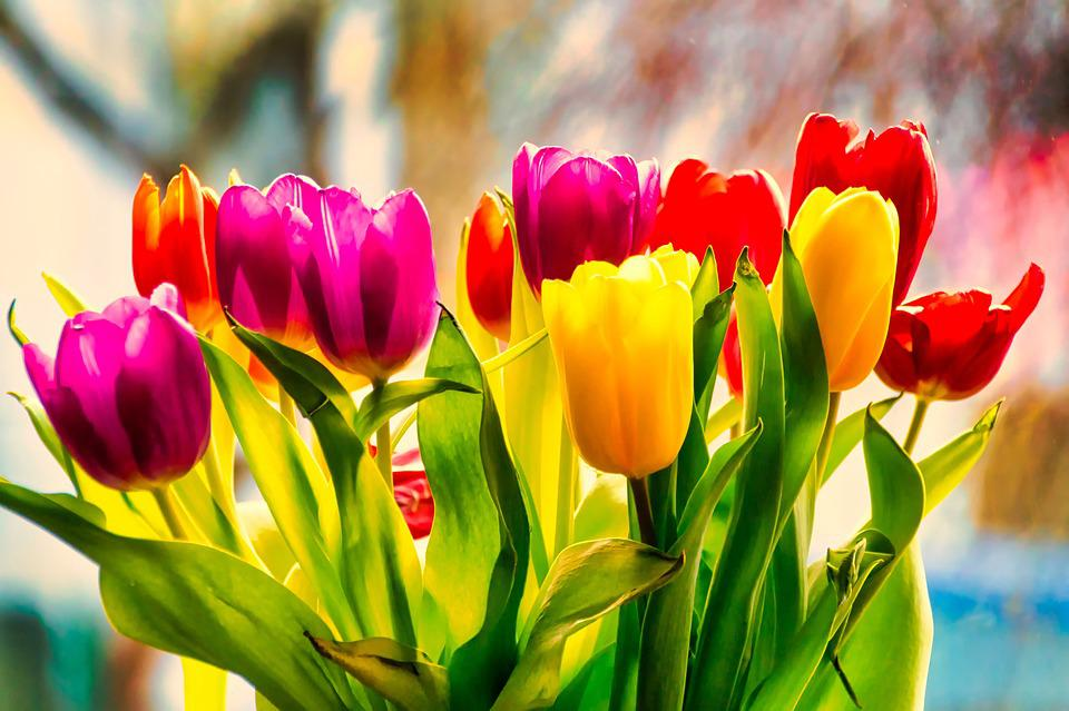 Tulpen Blumen Kostenloses Foto Auf Pixabay